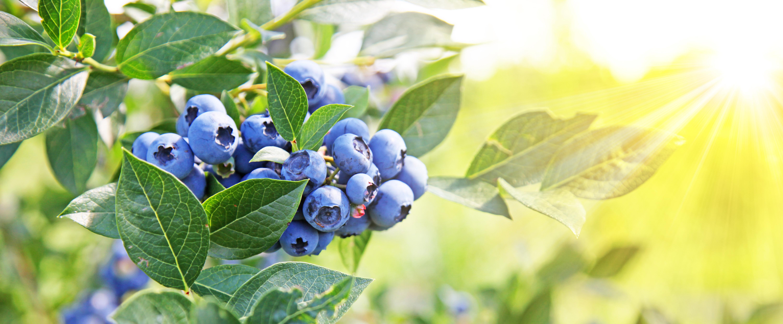 Witaminy dla roślin